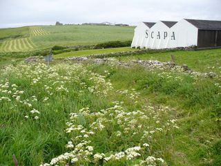 Clifftop_Path_at_Scapa_Distillery_orkney_scotland_by_Colin_Smith